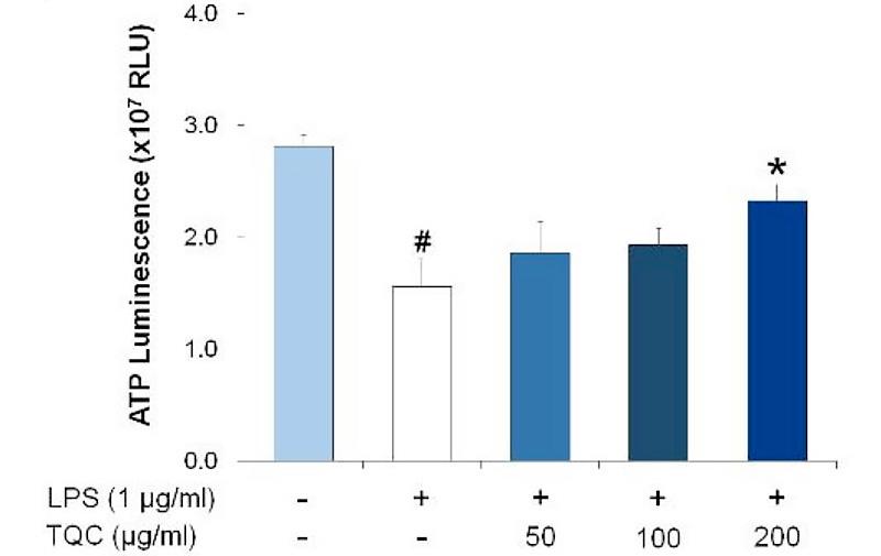 LPS 처리를 실시했을 경우 미토콘드리아의 ATP 생산량이 크게 떨어지지만, 백리향(TQC)의 농도가 높아질수록 ATP 수치도 증가하는 그래프