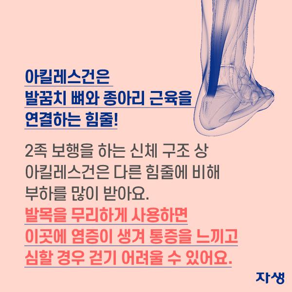 아킬레스건은 발꿈치 뼈와 종아리 근육을 연결하는 힘줄! 2족 보행을 하는 신체 구조 상 아킬레스건은 다른 힘줄에 비해 부하를 많이 받아요. 발목을 무리하게 사용하면 이곳에 염증이 생겨 통증을 느끼고 심할 경우 걷기 어려울 수 있어요. | 자생한방병원·자생의료재단