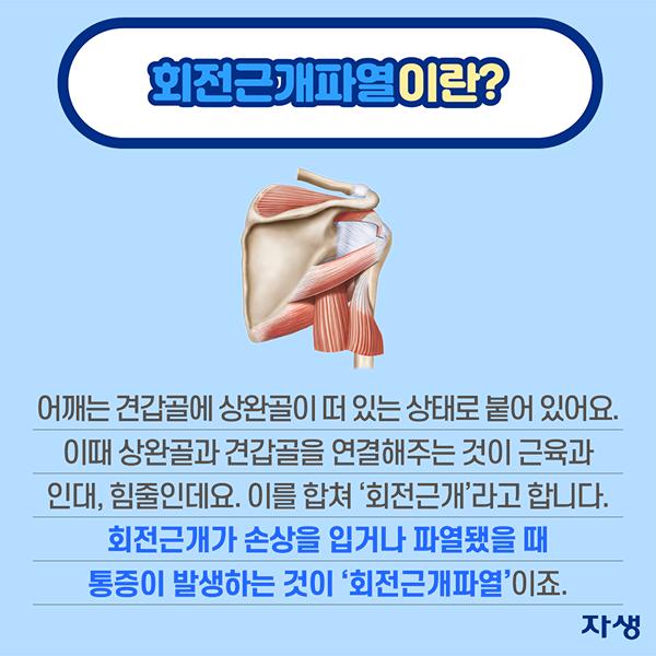 회전근개파열이란? 어깨는 견갑골에 상완골이 떠 있는 상태로 붙어 있어요. 이때 상완골과 견갑골을 연결해주는 것이 근육과 인대, 힘줄인데요. 이를 합쳐 '회전근개'라고 합니다. 회전근개가 손상을 입거나 파열됐을 �� 통증이 발생하는 것이 '회전근개파열'이죠. | 자생한방병원·자생의료재단