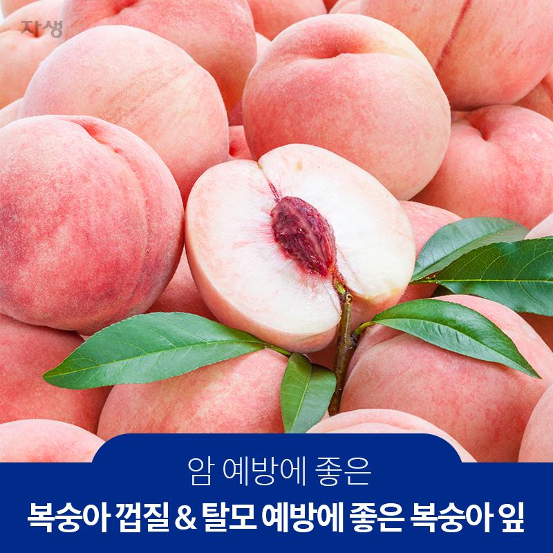 암예방에좋은복숭아껍질&탈모예방에좋은 복숭아잎 | 자생한방병원·자생의료재단